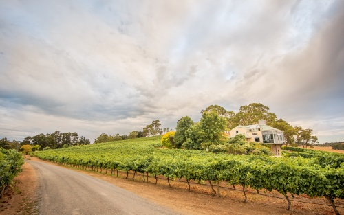 Summertime at Hahndorf Hill vineyard in the Adelaide Hills
